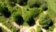 Galeria Roślinność OOB